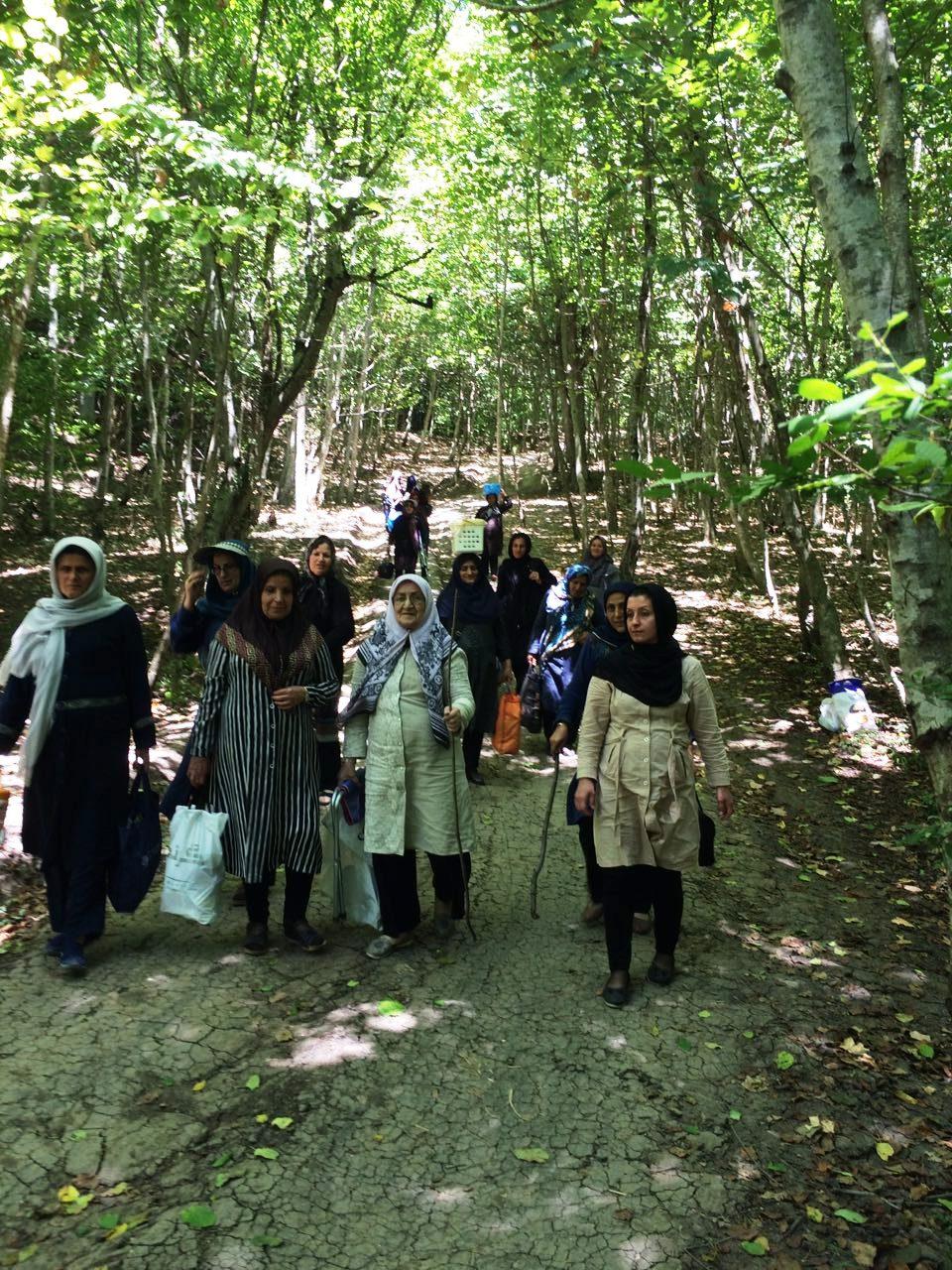 اردوی طبیعت درمانی در جنگل های مازندران